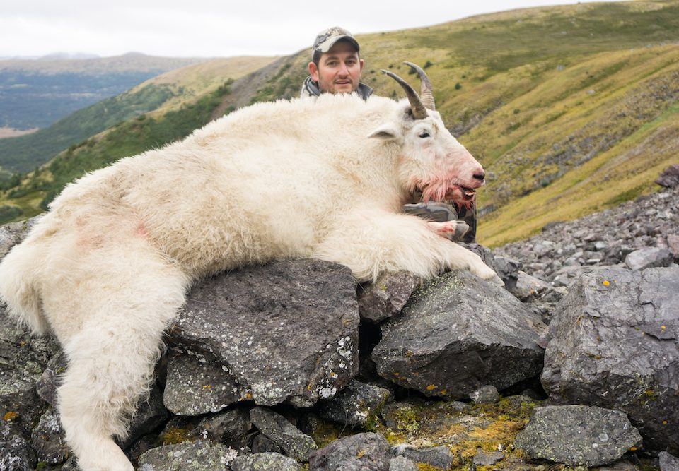 B.C. Mountain Goat